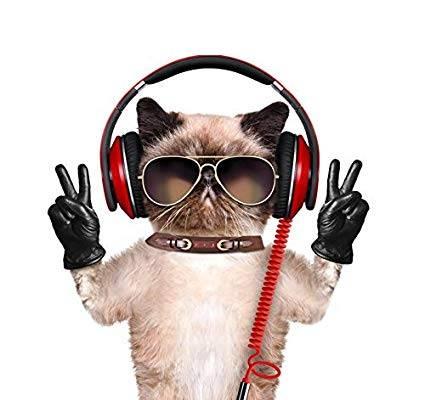"""捉到一只会发电报的猫咪,不会是""""间谍""""吧?"""