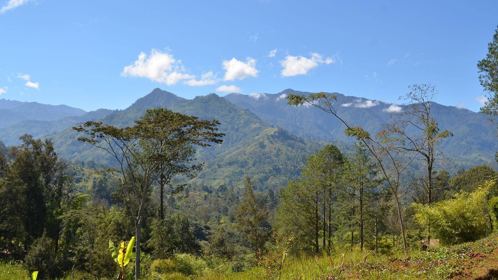 DX:P29RR  巴布亚新几内亚